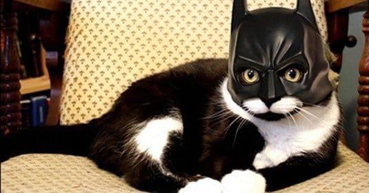 Демотиваторы о Бэтмене