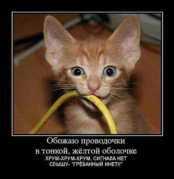Котик грызет провод — обожаю проводочки