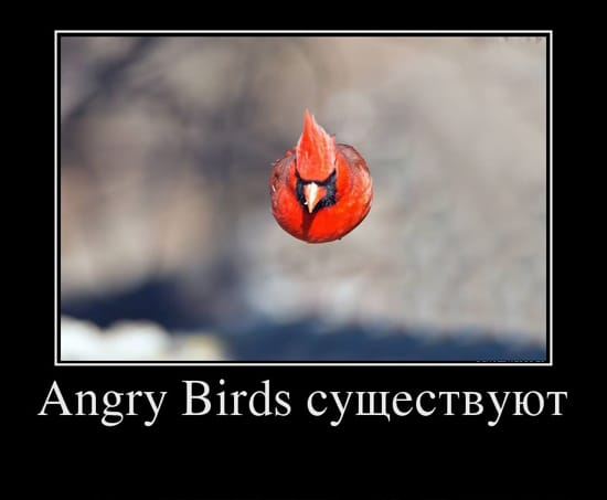 Angry Birds существуют