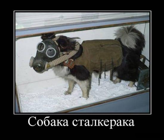 Собака сталкера
