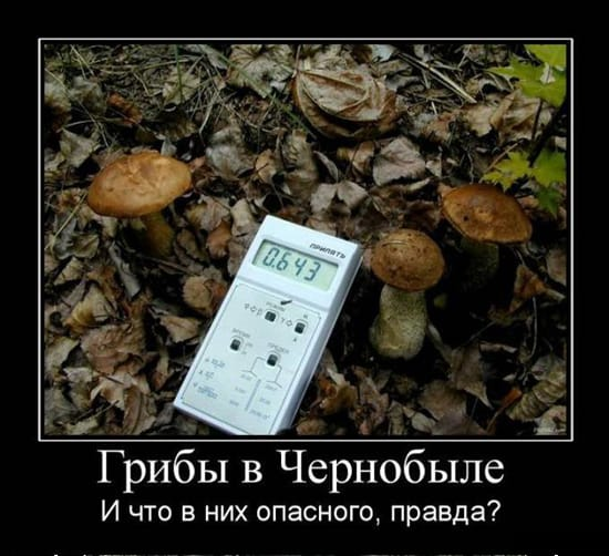 Что опасного в грибах из Чернобыля?