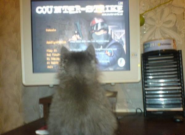 Кот играет в Counter-Strike