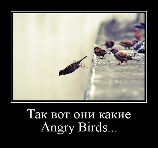 Так вот они какие! Angry Birds