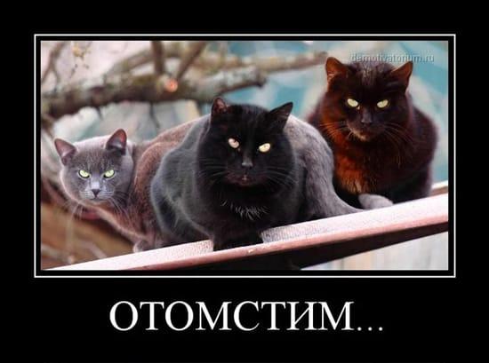 Отомстим