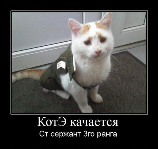 Кот качается